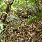 Rain forest section (226021)