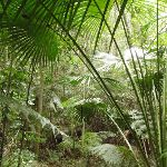 Leafy forest (226045)