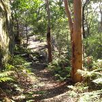 Walking track East of the cave on Kanning Walk (233589)