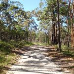 straight section on Sid Pulsford Walking trail (233990)