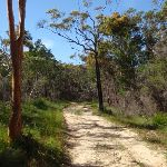 Moister section of the sandy Sid Pulsford Walking trail (233999)