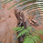Tree and fern (234332)