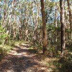 Track to Colin Watters Lookout near the tower (234401)