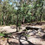 Small clearing were Sandringham track meets the management trail (235514)