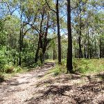 Int of Sid Pulsford walking trail and rest area trail (236783)
