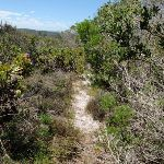 Over grown upper end of Grass Tree Track (249520)