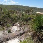 Eroded section of the Grass Tree Track (249607)