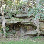 Rocks and trees in Nielsen Park (251795)