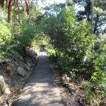Maintained walking tracks in Cremorne Reserve (258704)
