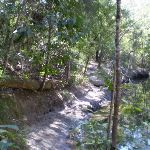 Warrimoo Track above the water (26654)