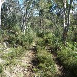 Regrowth on the old trail (269624)