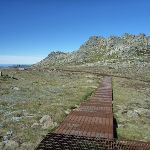 Looking abck along the Mt Kosciuszko Lookout path to the main track (271733)