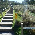 Merrits Nature Track steps at Friday Dr (273356)