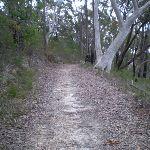 Track to Nerang Viewpoint (27542)