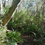 Enjoying the dense forest on the Merrits Nature Track (275801)