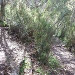 Hair pin bend on Bridle Trail (278390)