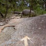 Track markers on rock (28991)