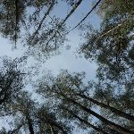 Don't forget to look up (290231)