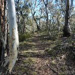 Walking through the forest on the Sawpit Track (298898)