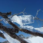 Ice on a dead branch (300826)