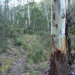 Walking along Sawpit Creek valley floor on the Pallaibo Track (303277)