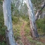 Walking along the Sawpit Creek valley floor on the Pallaibo Track (303721)