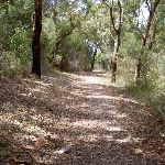 Forest on Challenger Track (30374)