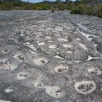 Tessellated Rock Platform close to West Head Rd. (304053)
