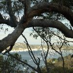 View from Lovetts Bay View Point (305327)