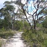 Track to Nerang Viewpoint (305894)