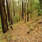Track near Muirs Lookout Cooranbong (320072)