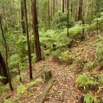 Forest and track near Muirs Lookout (320108)