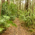 Forest and track near Muirs Lookout (320117)