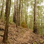 Steep track near Muirs Lookout (320165)