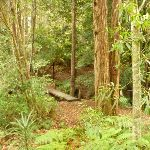 Track and bridge over creek near Pines campsite in the Watagans (320582)