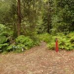 Start to track in the Pines campsite in the Watagans (320627)