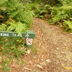 Track and track marker in pines camping ground in the Watagans (320630)