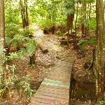 Timber bridge near Pines campsite in the Watagans (320645)