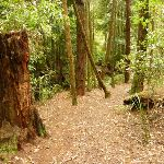 Track down to small waterfall near the Pines Campsite in the Watagans (320660)