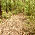 Track downhill near the Pines picnic area in the Watagans (320711)