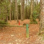 Locked gate at the Pines Picnic Area in the Watagans (320801)