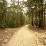 Palmers Rd near the Pines picnic area (320813)