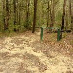 Track and sign in the Watagans (320885)