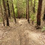 Steep track towards Abbotts Falls and Dora Creek in the Watagans (321149)