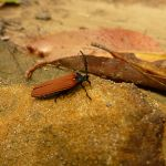 Insect on German Point Rd in the Watagans (321626)