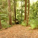 Track down to the creek near Turpentine campsite in the Watagans (322094)