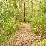 Track in the Watagans (322136)