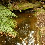 Dammed pool near the pines campsite in the Watagans (322160)