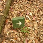 Small timber track marker on the Pines Circuit Walk in the Watagans (322289)