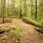 Track towards the Pines Picnic area in the Watagans (322322)